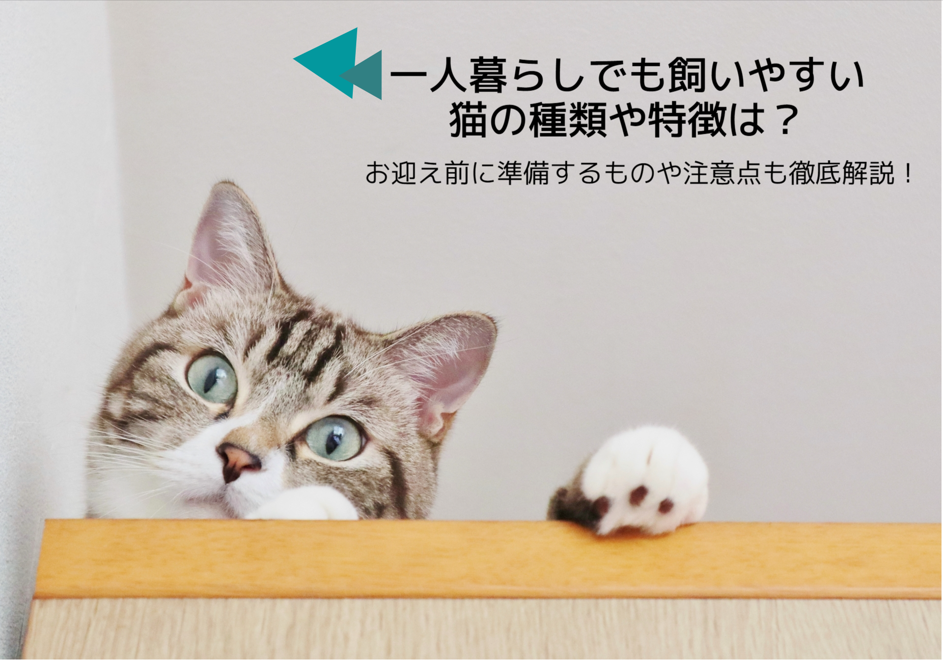 一人暮らしで飼いやすい猫の種類や特徴