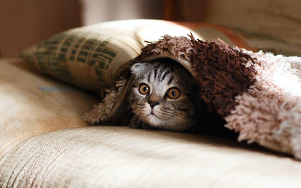猫との遊び方のコツやおもちゃの選び方、道具なしで遊ぶ方法を紹介!