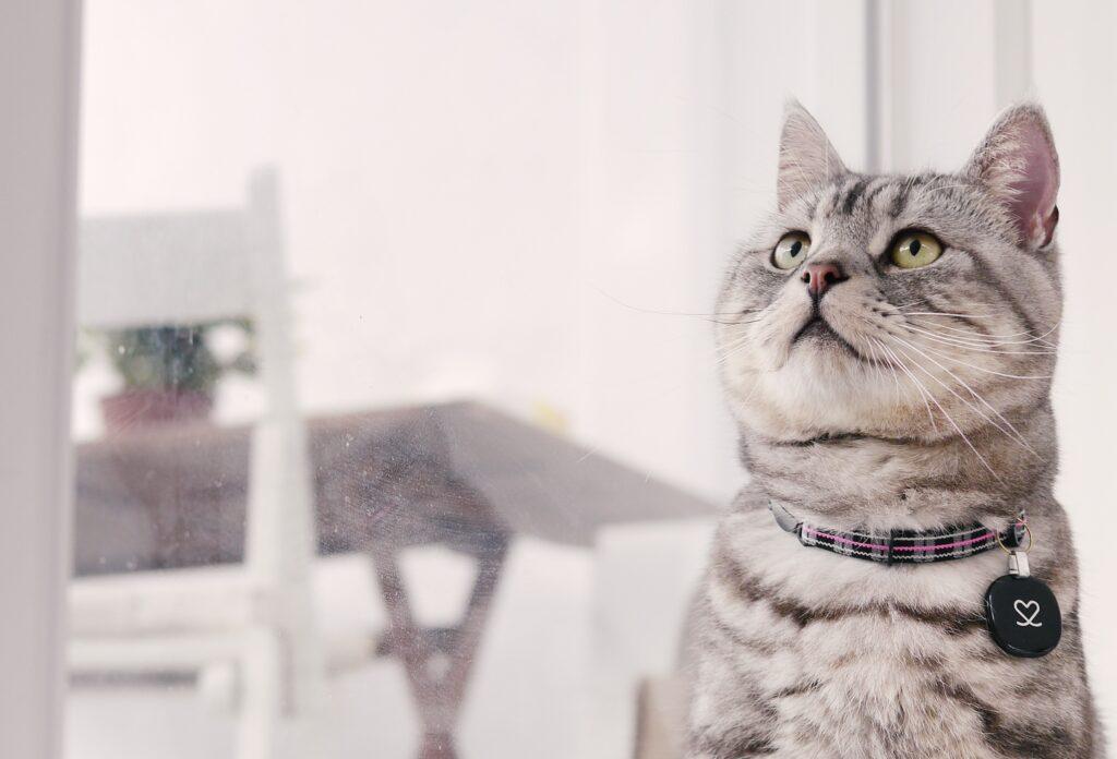 かわいそう?猫の完全室内外はストレス?それとも幸せ?