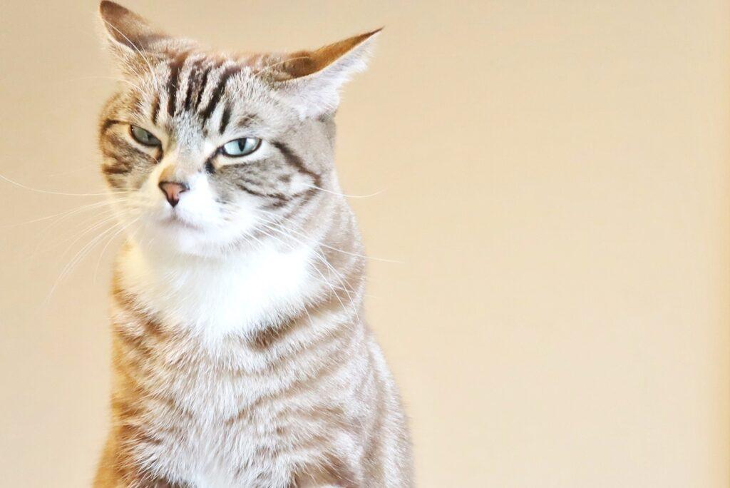 【今日から試せる!】猫の動物病院ストレスを軽減して通院する方法