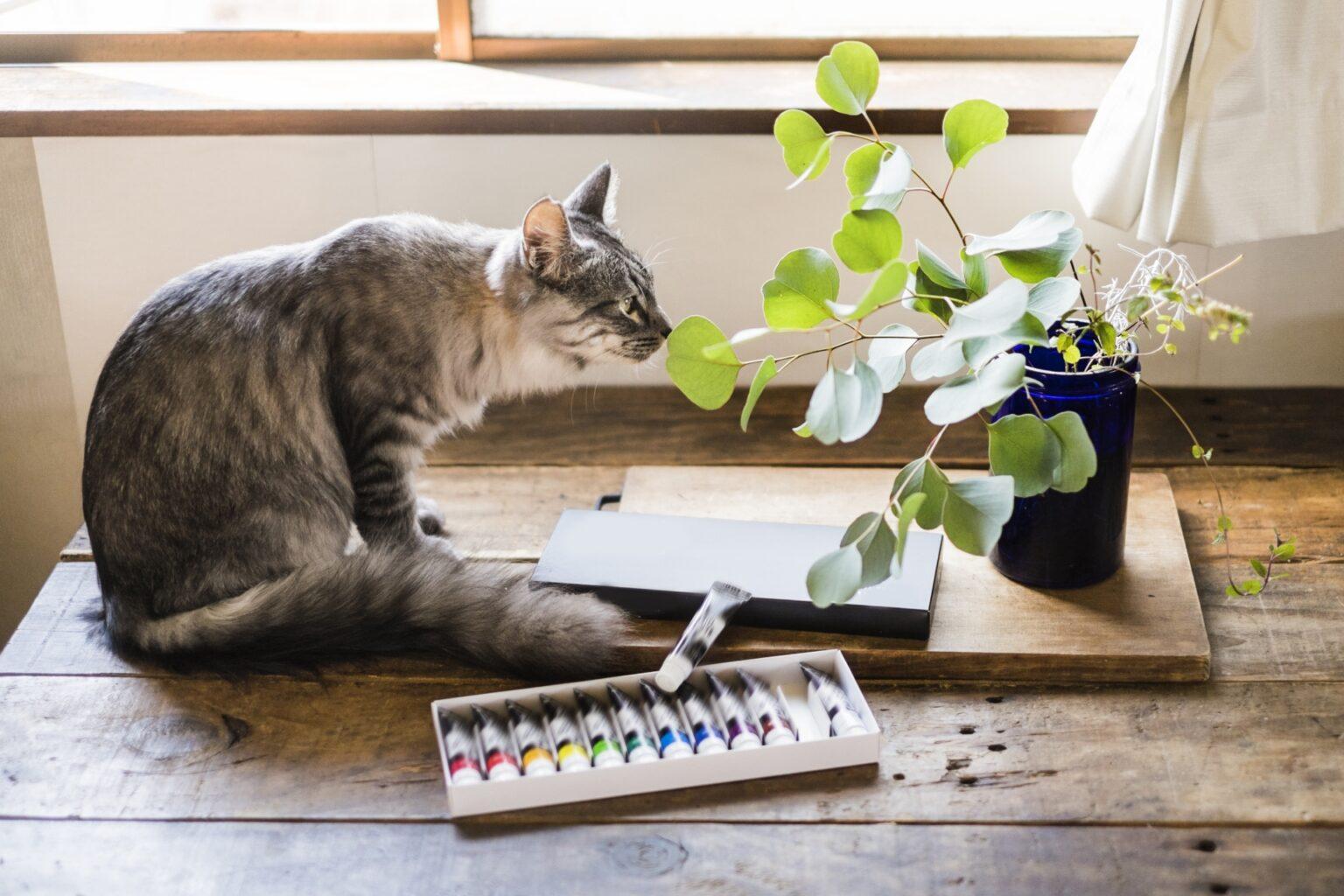 保護猫を飼うにはどうしたらいい?実体験を元にお迎えまでの流れを紹介。