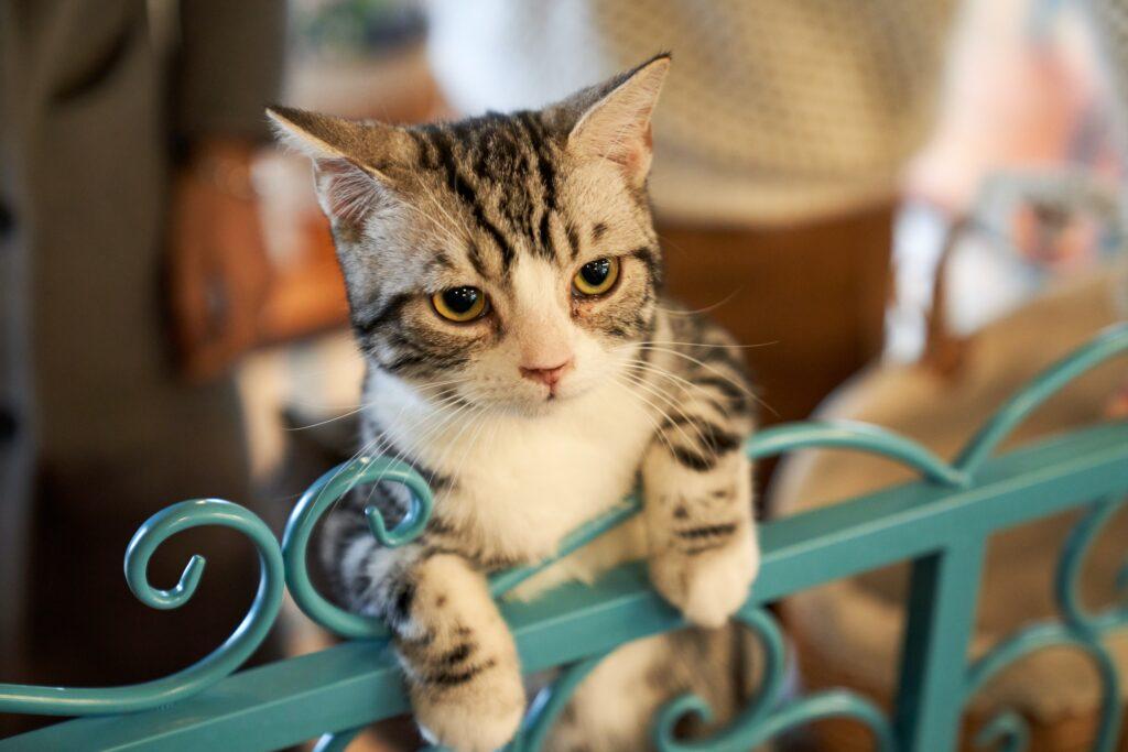 いざ保護猫を自宅に連れ帰る
