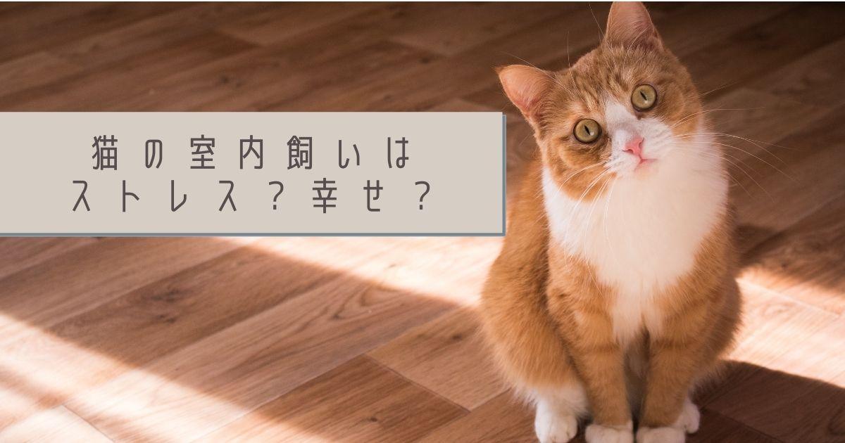 かわいそう?猫の室内飼いはストレス?それとも幸せ?