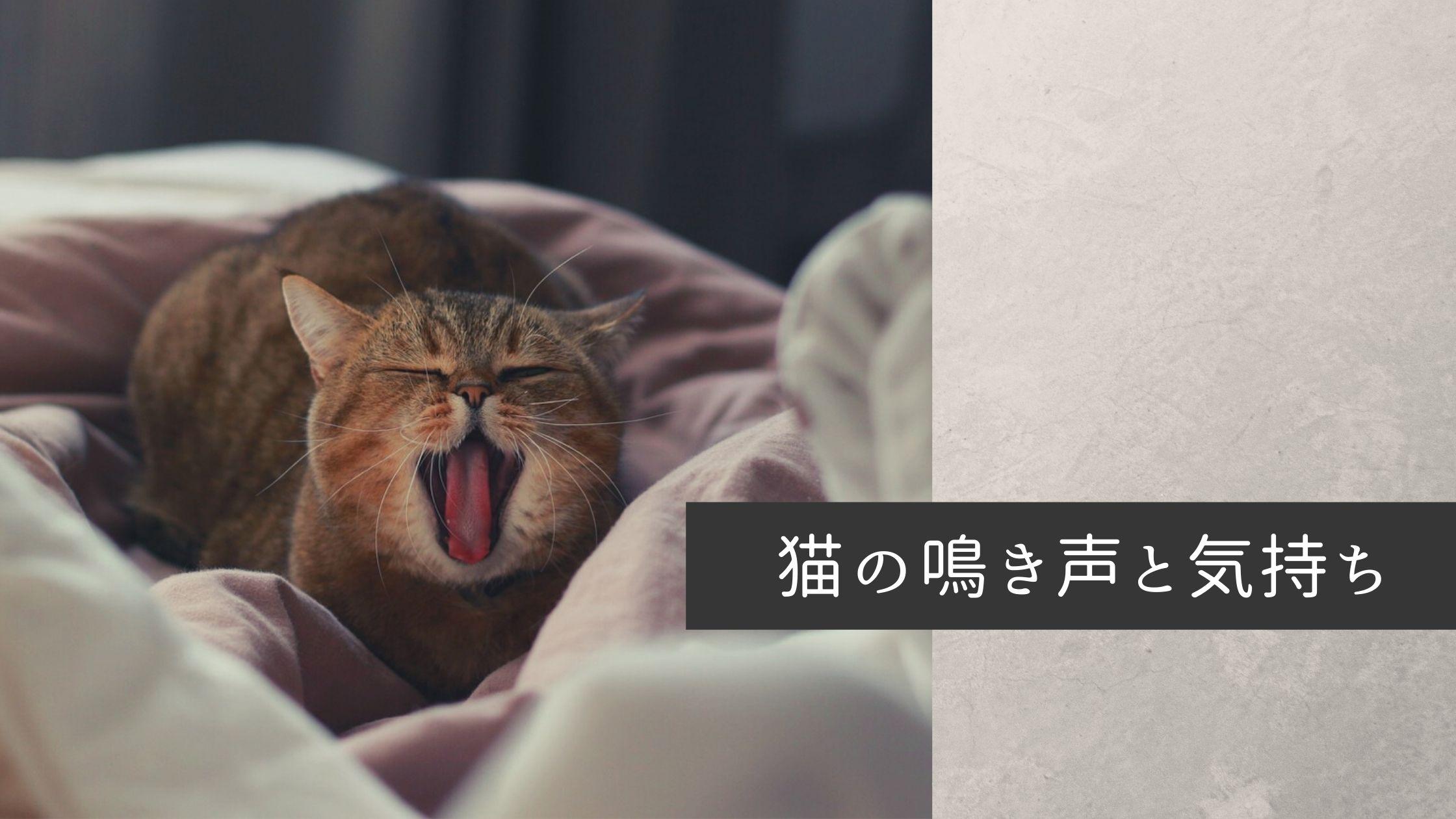 【徹底解明】猫の鳴き方に込められた意味や鳴き声の種類ごとの気持ち