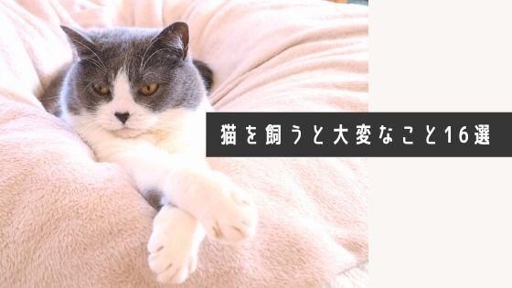 【猫を飼うなら知っておくべき】猫を飼うと大変なこと16個と対応策