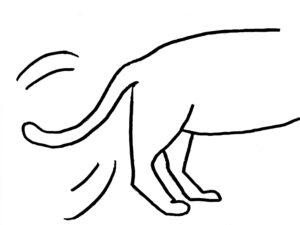 【画像付き】猫のしっぽに表れる気持ちとは?しっぽで気分が丸わかり!