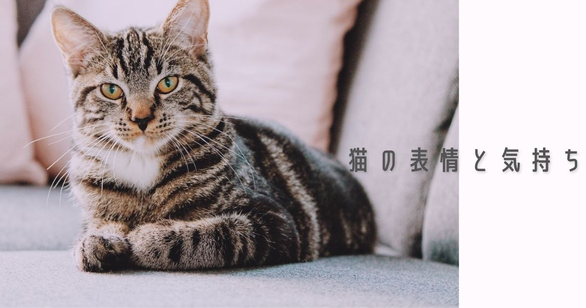 猫の表情から読み取る気持ちや感情【目・耳・ヒゲの変化が重要】