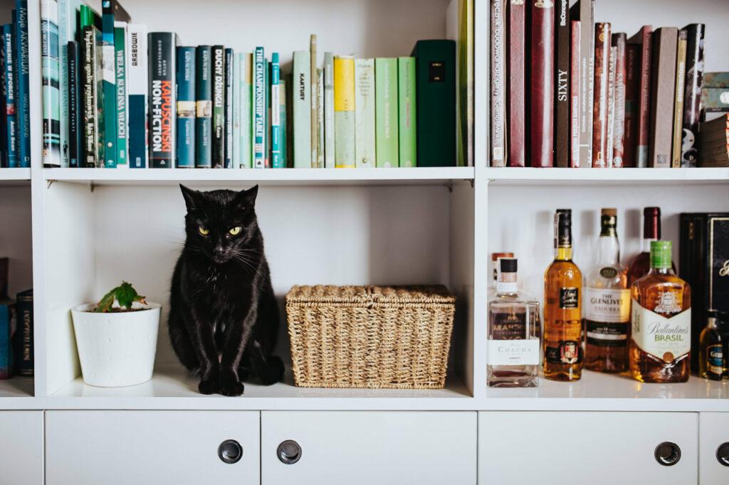 必須アイテム!一人暮らしで猫を飼うならケージが絶対に必要な理由